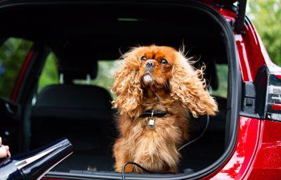 La MegaBox du Ford Puma, meilleure amie des chiens