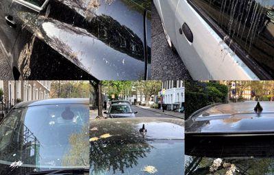 Comment Ford protège votre carrosserie des excréments d'oiseaux