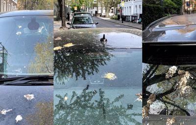 Hoe namaakvogelpoep de lak van je auto beschermt