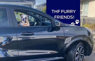 Team Hutchinson Ford's Furry Friends