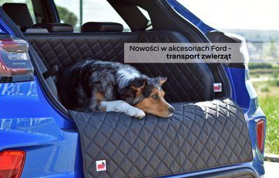 Nowe akcesoria Ford - transport zwierząt