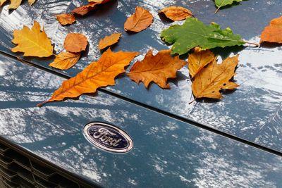 Jesień w salonie Ford Szumilas AT