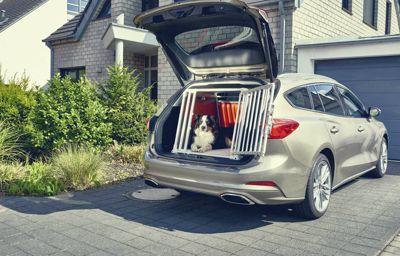 1 av 3 hundägare utsätter andra för fara genom att låta hundar vara lösa i bilen